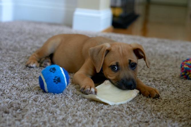Nákupný zoznam: Čo nemôže chýbať vzákladnej výbave pre nového psíka?